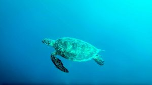另外還可與海龜悠遊其中