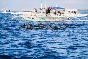 近距離欣賞海豚